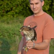 Matt Wolf with a Red Tailed Hawk