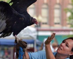 Lauren Norvell with resident turkey vulture Basil at the Franklin Street Bazaar