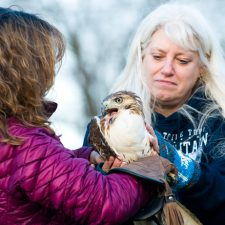 Lauren Norvell & Regina Wolf prepare to release a rehabbed red tailed hawk