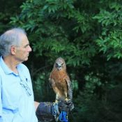 Mel Lodato with resident Red Shouldered Hawk Cinnamon