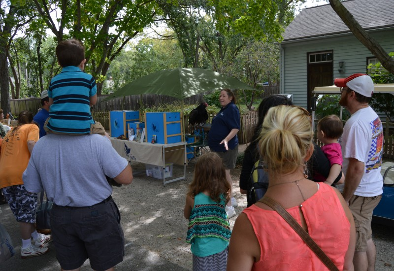 Lisa Snyder demonstrating resident Turkey Vulture Basil to a group of onlookers