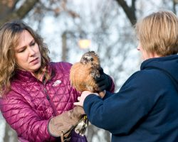 Lauren Norvell & Regina Akin prepare to release a rehabbed raptor