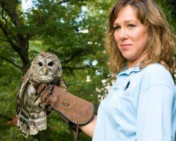 Lauren Norvell & resident barred owl Hoot