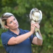 Keely Hunt releasing a rehabbed red-tailed hawk.